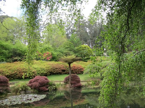 National Rhododendron Gardens: The small lake 2
