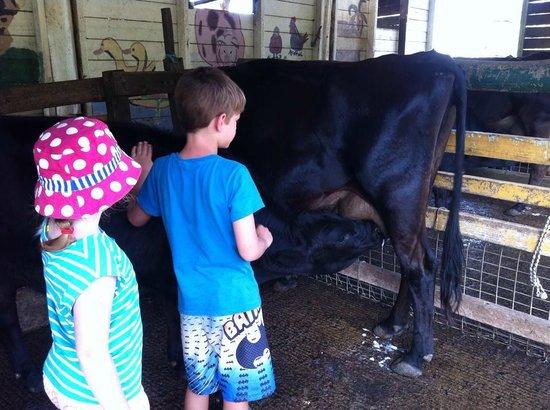 Bestbrook Mountain Resort : animal feeding and watching