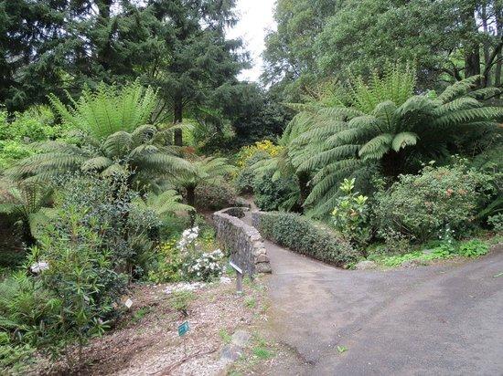 National Rhododendron Gardens: Rustic stone bridge