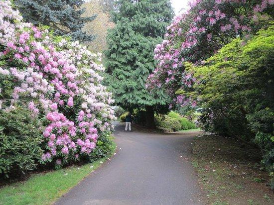 National Rhododendron Gardens: Superb October floral display