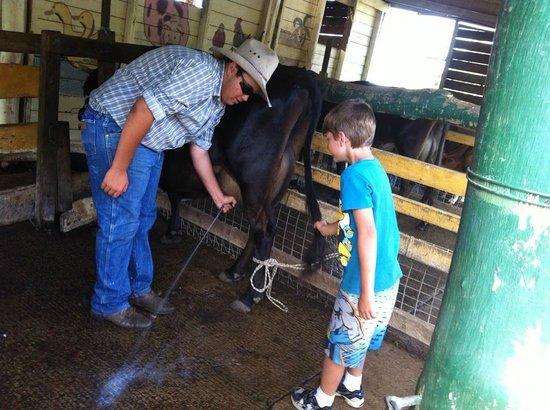 Bestbrook Mountain Resort : milking cows