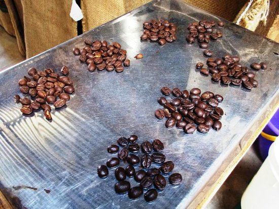 El Toledo Coffee Tour: Different roasts