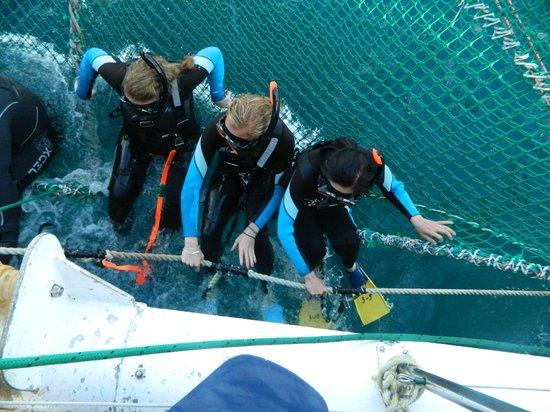 Dolphin Swim Australia: in the net, getting ready to swim !
