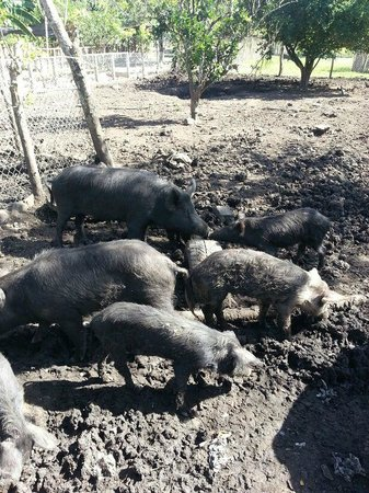Country World Adventure Park: Cute wild boars