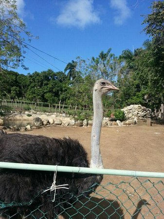 Country World Adventure Park: Cool Ostrich