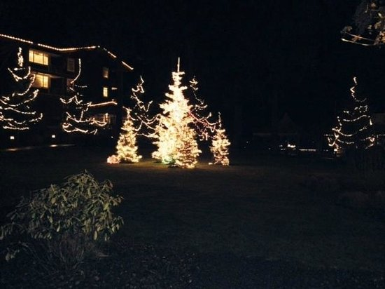 Alderbrook Resort & Spa: Lighted trees from room