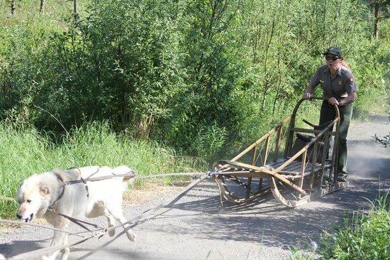 Sled Dog Demonstration: Sled during race