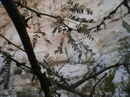 Montezuma Castle National Monument: Leaves 2