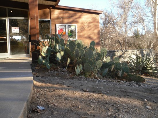 Montezuma Castle National Monument: Prickly Pears next to Visitor's Center