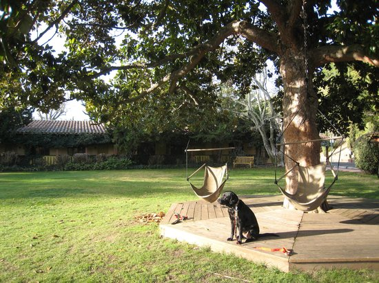 Inn Marin: Dog-friendly courtyard