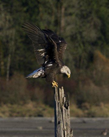 Prestige Sportfishing: Landing on a piling