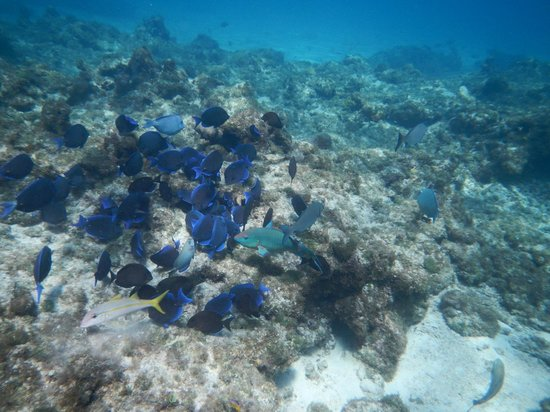 The Westin Grand Cayman Seven Mile Beach Resort & Spa: fish