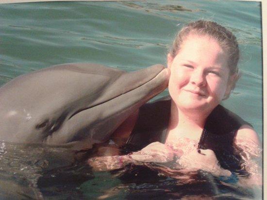 Dolphin Cove: Amazing