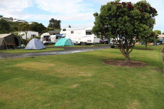 Kawhia Beachside S-Cape Holiday Park: General camping area