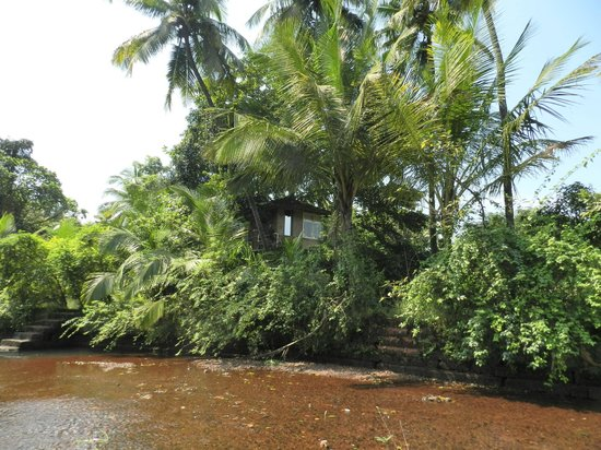 Atithi Parinay Homestay: Tree house nestled among trees at the back and gives a good view of the rivr and surrounding fie