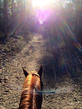 Bosque Colomos : Horse riding in Colomos