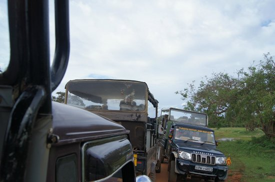 Yala National Park: A crush of tourist jeeps