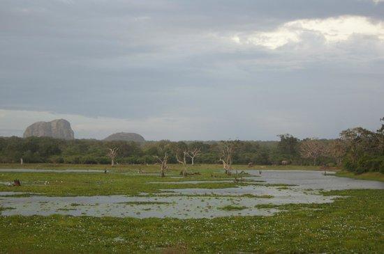 Yala National Park: Pretty scenery