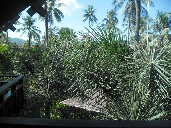 Patong Merlin Hotel: plants