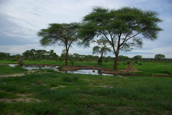 Senyati Safari Camp: the waterhole (bar view)