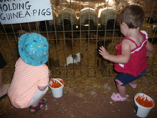 Countrylife Farm: Feeding the guines pigs kept the little kids entertained
