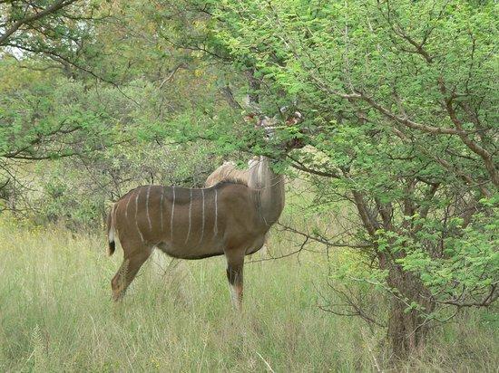 Mokolodi House: Mokolodi Nature Reserve