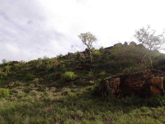 Lions Bluff Lodge: Lodge auf dem Berggipfel