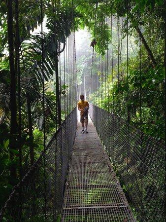 Arenal Birdsong VIlla : Arenal Hanging Bridges