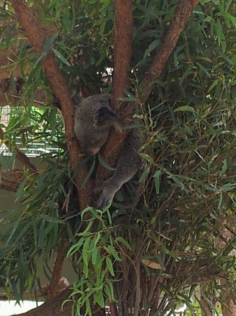 Rockhampton Botanic Gardens: Just chill'n on a hot day