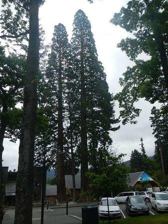 Hanmer Backpackers: 100 jährige Bäume
