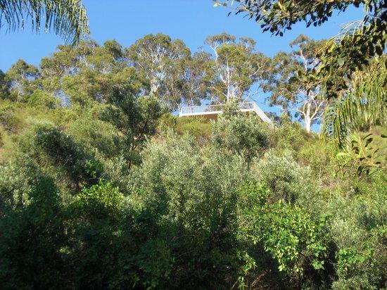 Sullivans Hotel: Blick auf Kings Park