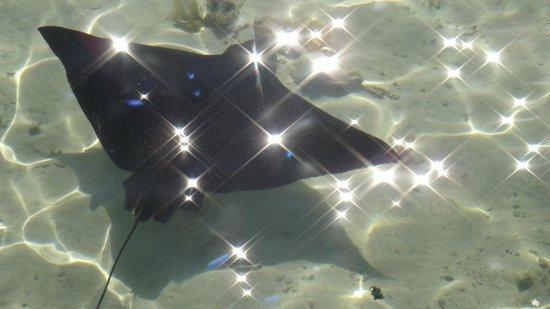Sofitel Bora Bora Marara Beach Resort: подводный мир