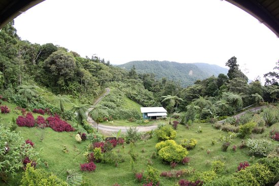 Kinabalu Mountain Lodge: Udsigten fra terrassen