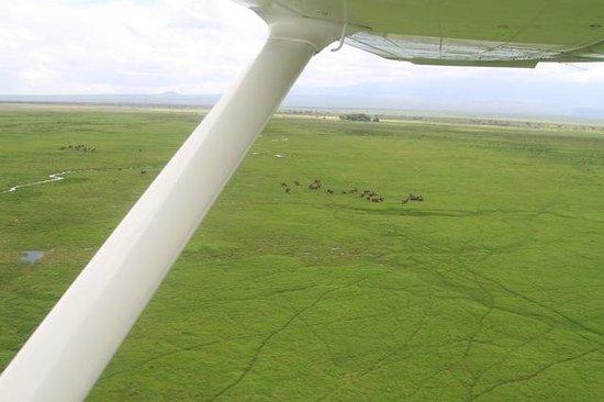 Tortilis Camp: Arriving at Amboseli - very lush