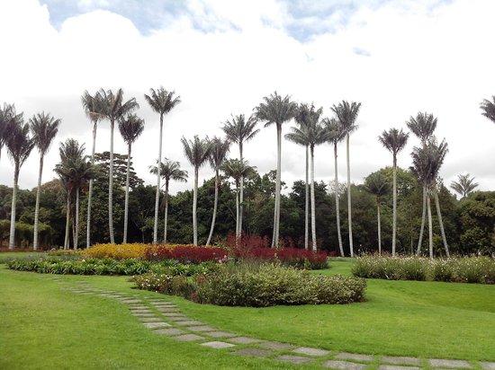 Esas palmas son espectaculares picture of jardin for Jardin botanico bogota