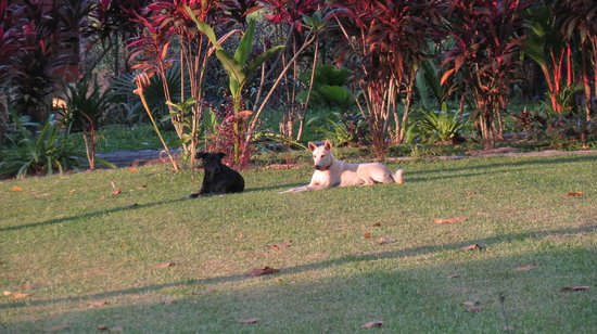Sunset Valley Holiday Houses: Two of the resident dogs