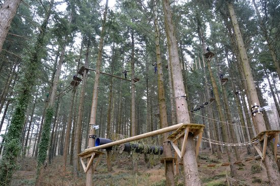 Zip World Fforest: Looking up to the main Adventure course