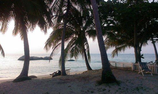 Sea Scene Resort: La plage