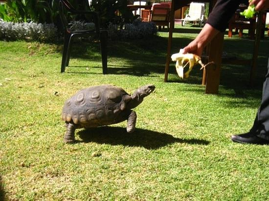Casa de Avila - For Travellers : paca the hotel tortise