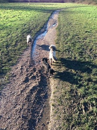 Elmdon Park: Walking the dogs in the nature reserve - early winter
