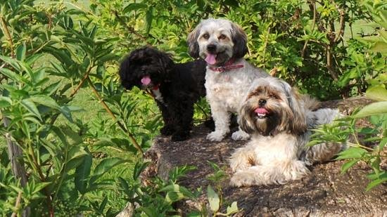 Elmdon Park: The dogs enjoying a rest on one of the many tree stumps around the park