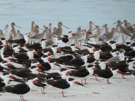 BEST WESTERN PLUS Beach Resort: Superbes oiseaux