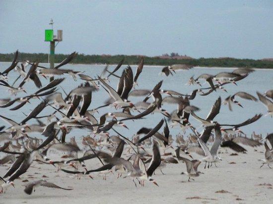 BEST WESTERN PLUS Beach Resort: Oiseaux