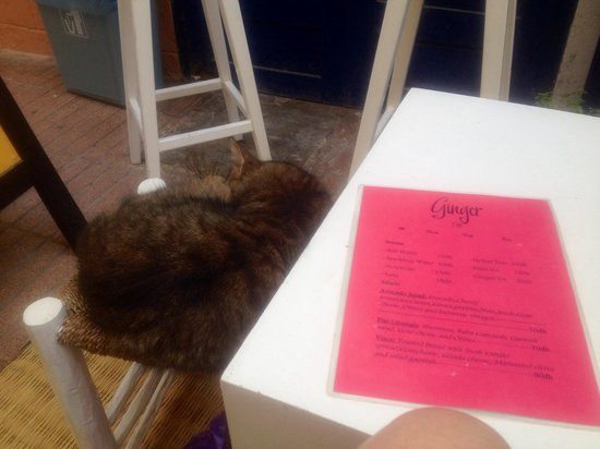 Ginger Cafe : Cafe cat
