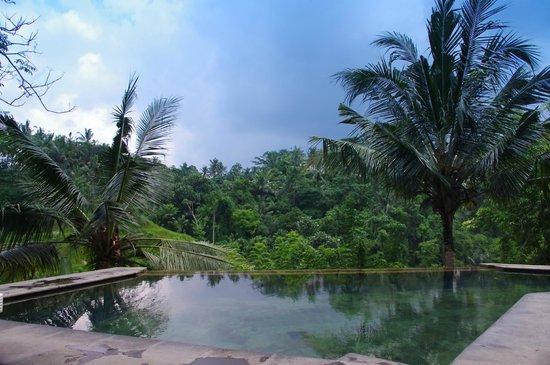 Beji Ubud Resort: Бассейн