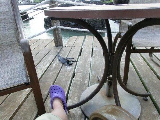 Red Mangrove Aventura Restaurant: Marine Iguana