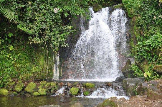 Blue River Resort & Hot Springs: Waterfall on Horseback Riding Tour