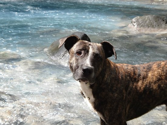 Blue River Resort & Hot Springs: Echo on Palmitos Hike