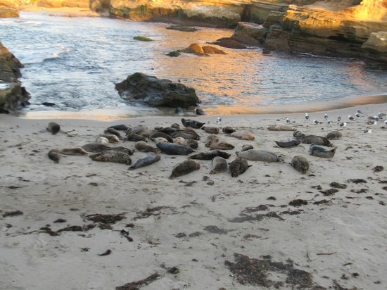 Inn by the Sea: Seals on the local beach