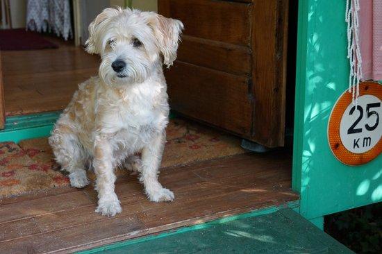 Amandari : Unser Hund bewacht das Roulette